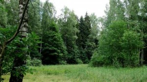 Лесные массивы