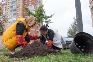 Собянин предложил москвичам выбрать виды деревьев для посадки вокруг домов