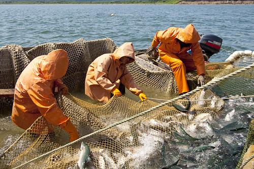 рыбная ловля в приморском