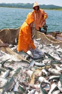 Новости сахалинской путины: Снижены административные барьеры для сахалинских рыбаков