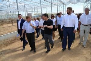 Воробьев посетил новый крупнейший тепличный комплекс в Подмосковье