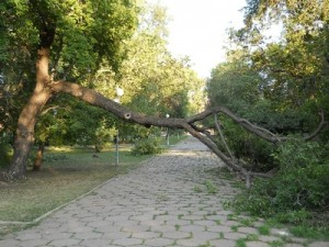 Новости курорта: Сочи восстанавливается после ночного урагана