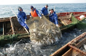 Лососевая путина: Хабаровские рыбаки увеличили объемы добычи дальневосточного лосося