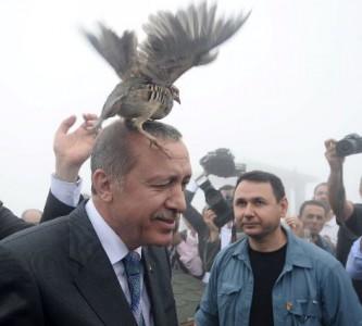 Офицальный представитель Белоголового орлана в Турции нанёс сокрушительный удар по амбициям Эрдогана.