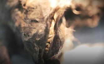 Мумия доисторического щенка.