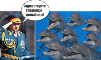 Новый отряд дельфинов появится в рядах ВС РФ.